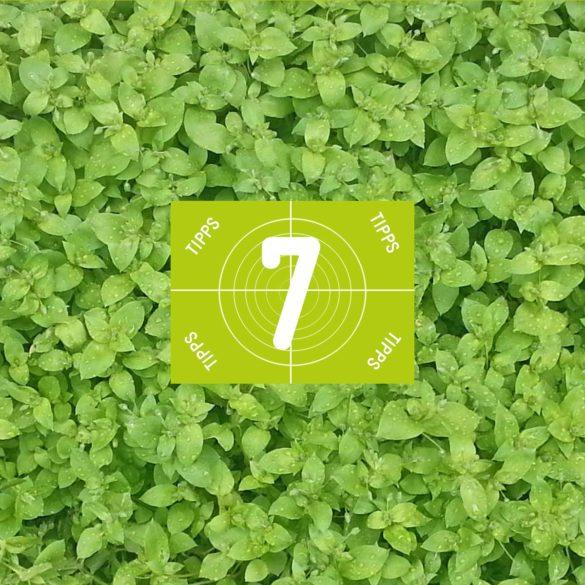 wilkräuter-sammeln-7-Tipps