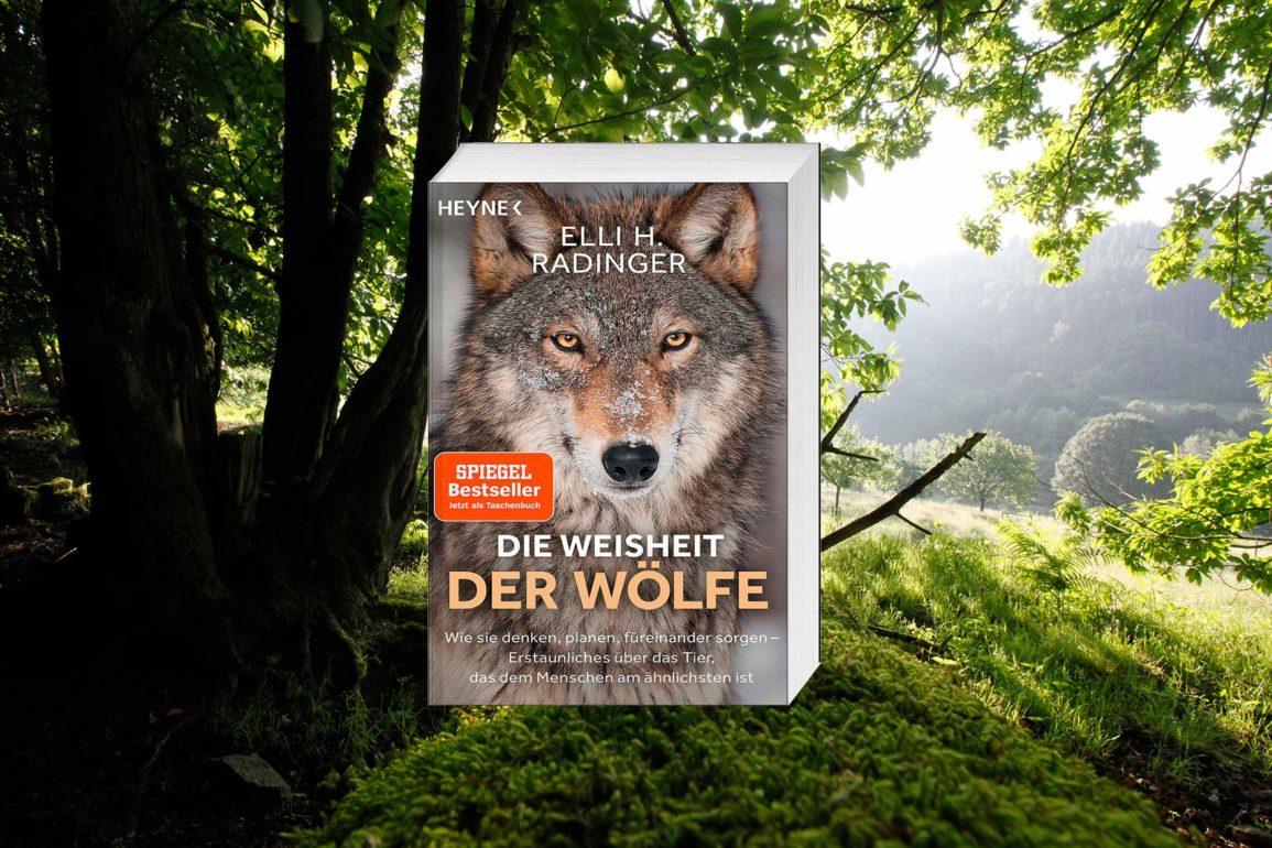 die-weisheit-der-wölfe